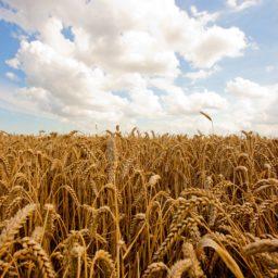 Agriculture/Farming